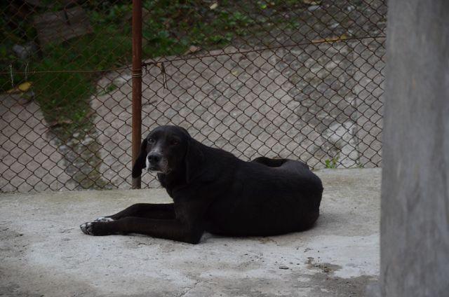 Пес Уча - любимец отдыхающих в Сарпи. Знает, что покормят вкусненьким